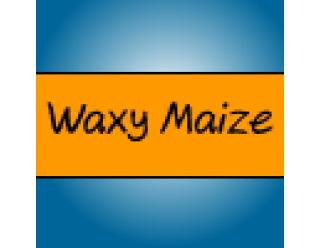 Waxy Maize (6)